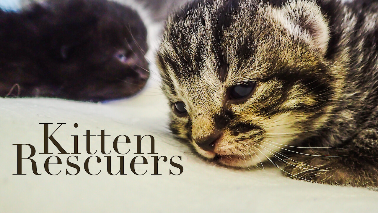 Is Kitten Rescuers Available To Watch On Netflix In America Newonnetflixusa