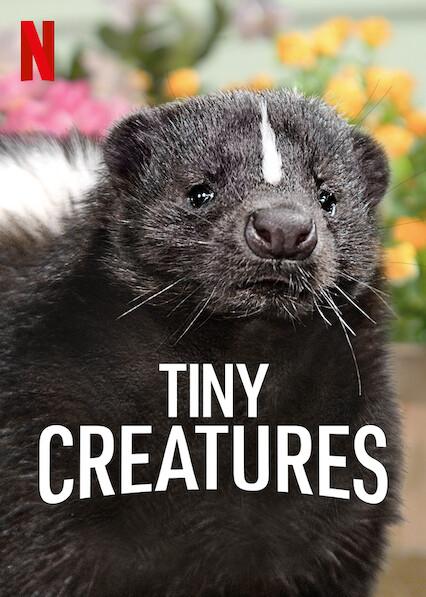 Tiny Creatures on Netflix USA